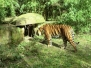 Stammestag im Zoo Heidelberg 2014